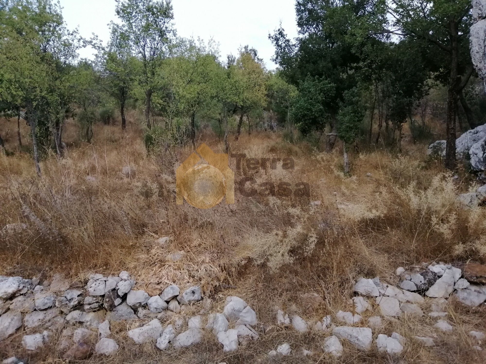 Land for sale in Faytroun ,banker check accepted
